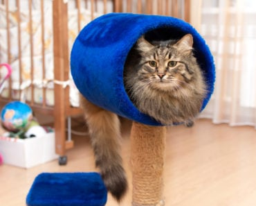 How to Keep Your Pet Cat Active Indoors