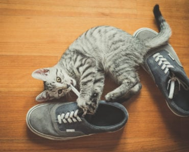 Why Do Cats Love Shoes So Much?