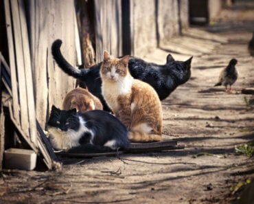 Why Do People Get Tickets for Feeding Feral Cats?