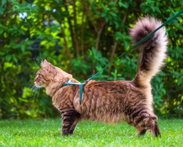 Is Walking Your Cat on a Leash a Bad Idea?