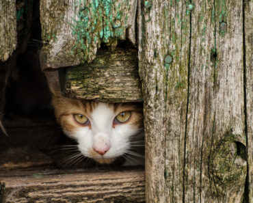 How to Help a Semi Feral Cat Adjust to Your Home
