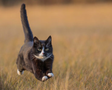 Why The Fastest Human Can't Outrun a Housecat