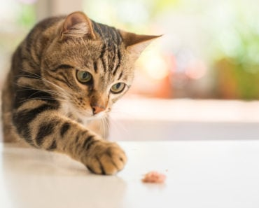 Reasons Why Your Cat Could Have Flaky Skin