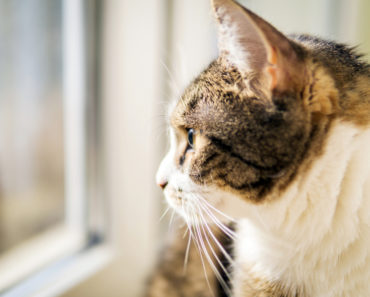 Five Signs That Your Cat is Overstimulated