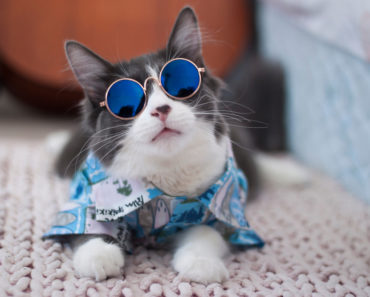 The Cat Who Wears Glasses to Help Kids Feel Better About Wearing Theirs