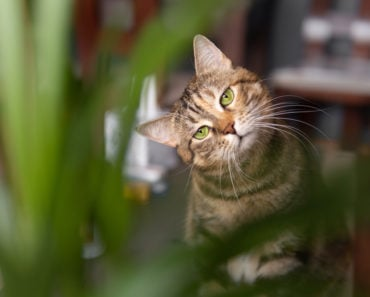 A List of Edible Plants that Your Cat Can Safely Eat