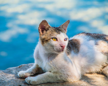 Cat Found Suffering from Fishing Hooks gets Second Chance