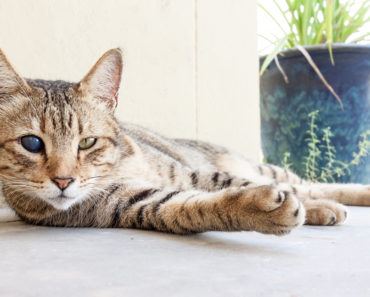 How to Prepare your Home When Adopting a Blind Cat