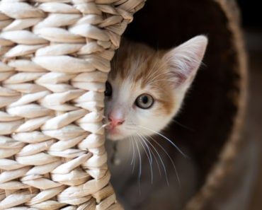 Five Reasons Your Cat Likes to Hide