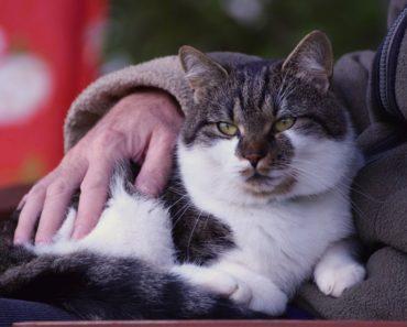 Kindness of Strangers Reunites Missing Elderly Cat and Family