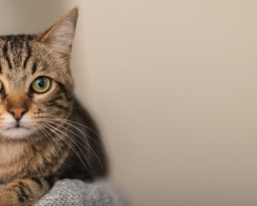 Science Reveals How Tabby Cats Get Their Stripes