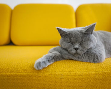 How the Lockdown May Have Impacted Your Cat's Mental Health