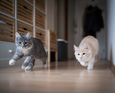 Indoor vs. Outdoor Cats: What are the Main Differences?
