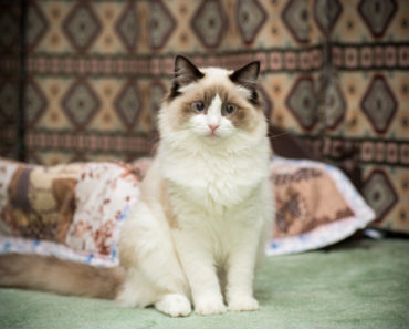 Pet Cat Missing For 10 Years is Reunited With Owner