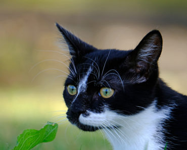 Your Cat's Fur Can Change Color for the Coolest Reason
