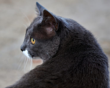 Idaho Cat That Ended Up in Montana Reunited With Its Family