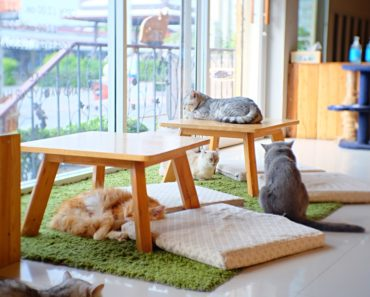 Seattle Launches its First Cat Cafe